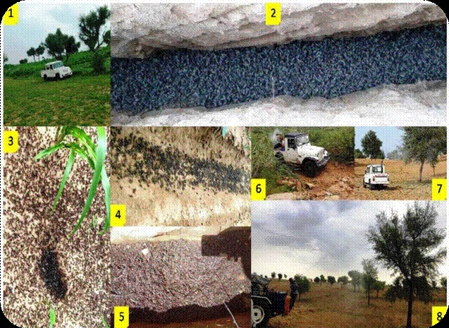 Locust control operations undertaken in more than 5.22 lakh hectares area in 10 states
